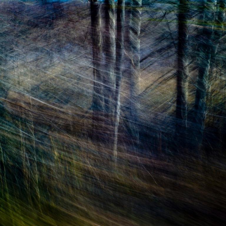 Årets nordiske kreative naturbilde