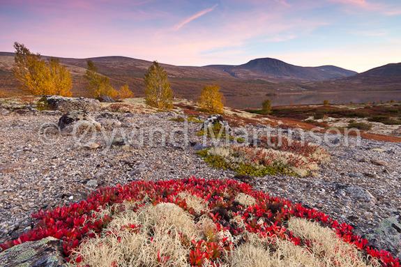 © Øyvind Martinsen - Høstfarger på Dovre