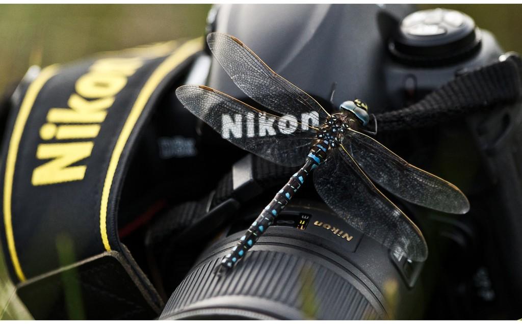 Livet som fotograf blir lettere når innsektene er litt kalde.