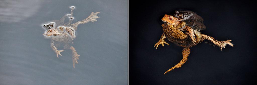 Uten Polafilter (t.v) og med polafilter. Dramatisk forskjell når du fotograferer ned i vannet.