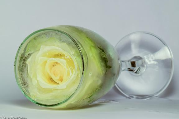 Roger Brendhagen - Hvit rose i vinglass