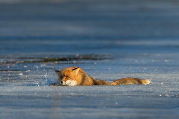 Foto: Per Karlsson / NNPC -
