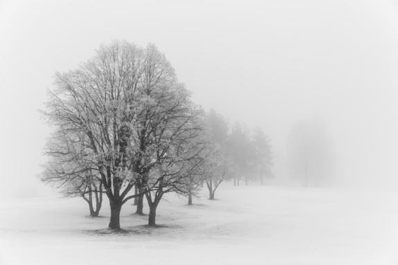 Foto: Vegard Tangen - Trær i vintertåke