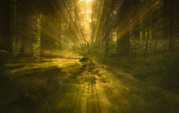 Roger Brendhagen - Fotolek i eventyrskogen
