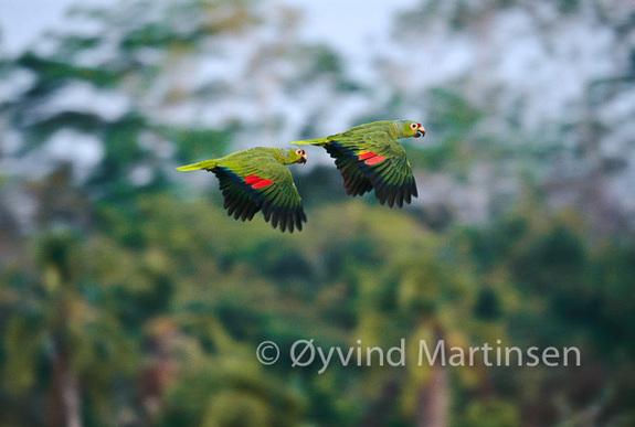 Øyvind Martinsen - Foto reise i Panama