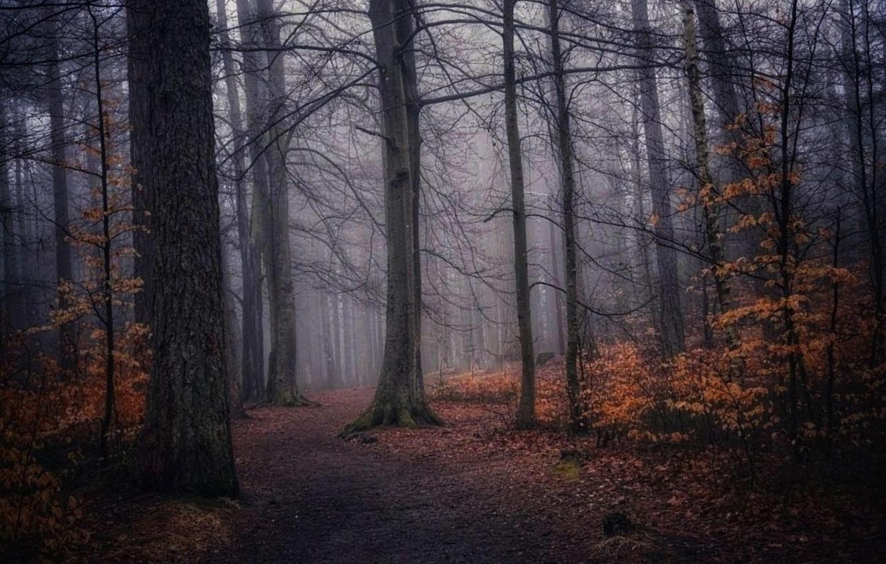 Magisk skog