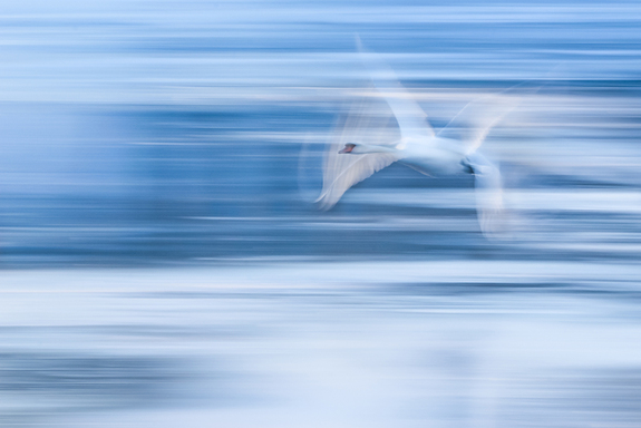 Foto: Tobias Gjerde -