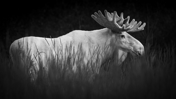 Foto: Roger Brendhagen -