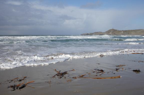 - Bølger og ilandvasket kelp på en av de lange Jær-strendene