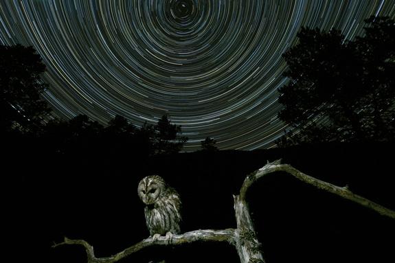 Foto: Geir Ole Laberg - Kattugle under stjerner