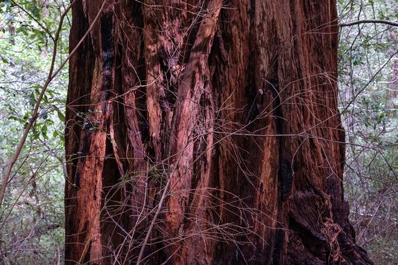 Dan Skjæveland - Sequoia National Park, 2019